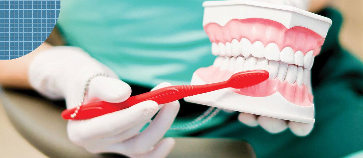Dental assistant brushing false teeth